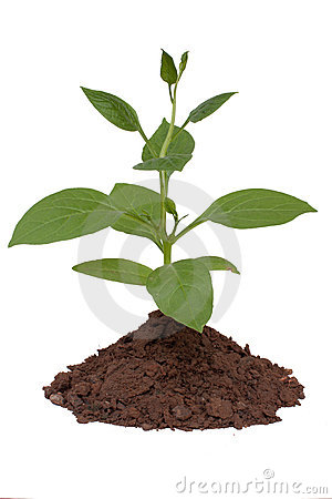 Free Trees And Soil Stock Images - 21104834