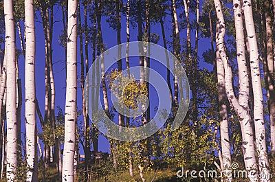 Trees in Autum