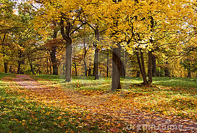 Trees in autumn park