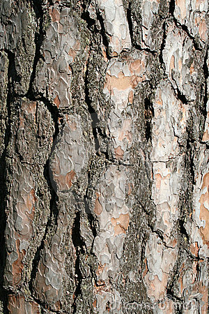 A trees bark - vertical