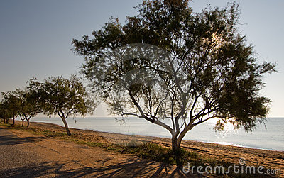 Trees by the beach