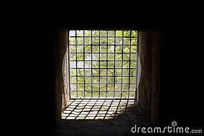 Trees behind bars