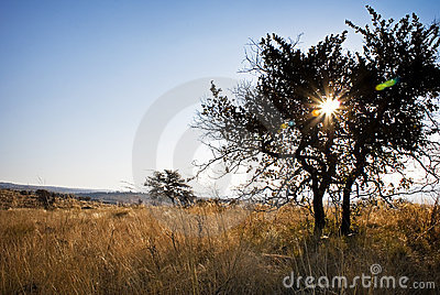 Trees in Bushveld centered Solar Flare