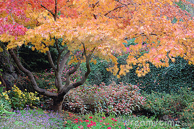 Trees in Butchart Gardens