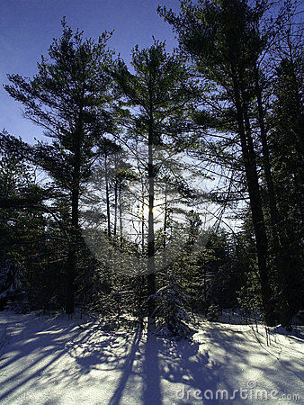 Free Trees Casting Shadows On Snow Stock Photography - 4931122