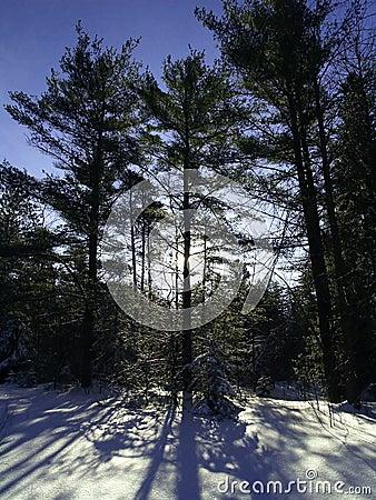 Trees casting shadows on snow