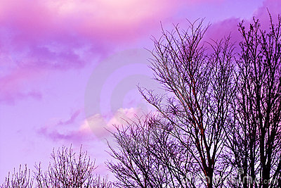 Trees and pink clouds