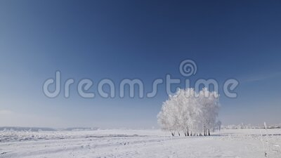 Trees cluster on the winter snowy field. Isolated trees cluster on the winter open field covered in frost - beautiful frozen landscape with blue sky and sunshine stock footage