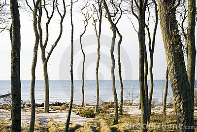 Trees by coastline