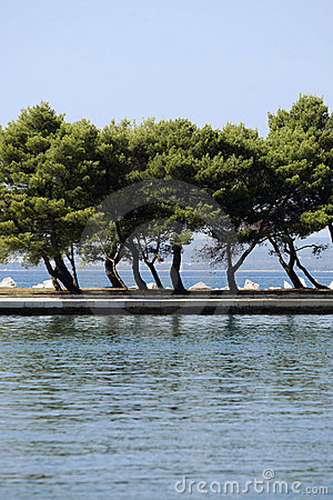 Trees on coastline