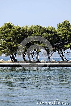 Trees on coastline