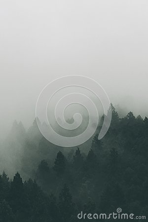 Trees Cover With Fog Free Public Domain Cc0 Image