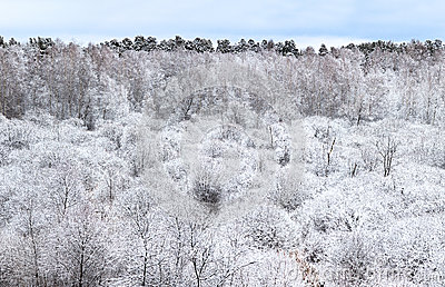 Trees covered by frost.