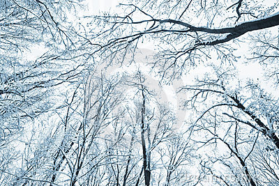 Trees covered snow over winter sky