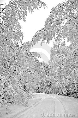 Trees covered with winter snow