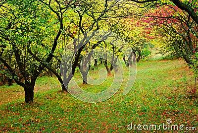 Trees in fall season