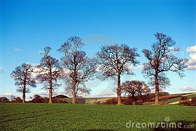 Trees in farmland landscape.