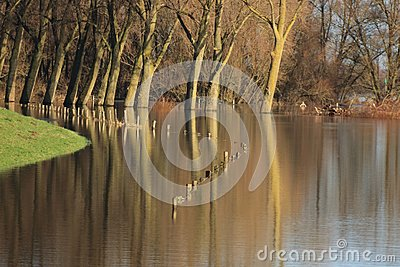 Trees and fence in the flooded river ijssel