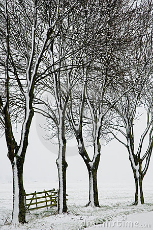 Trees and fence in wintertime