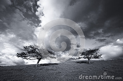 Trees in the field and the clouds