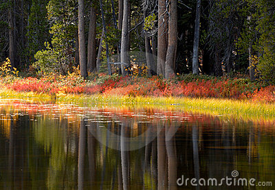 Trees and foliage reflecting their fall colors into a Yosemite p
