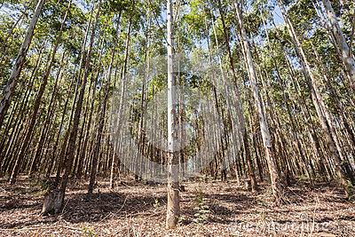 plantation rum single cask kaufen zahlarten