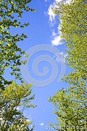 Trees framing blue sky