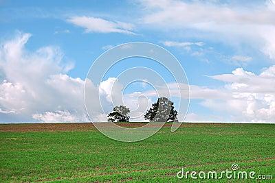 Trees in green field.