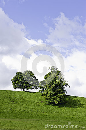 Trees on a green hilltop
