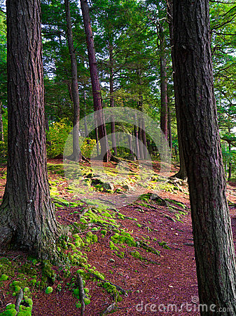 trees and Green Moss floor in forest
