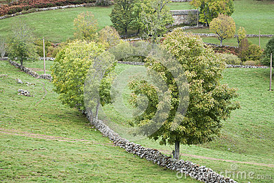 Trees in green pastures fenced with stone walls