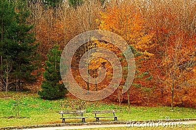 Trees in a city park in autumn season