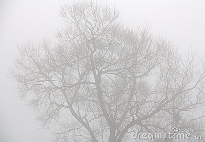 Trees through heavy mist