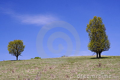 Trees, hill and blue sky