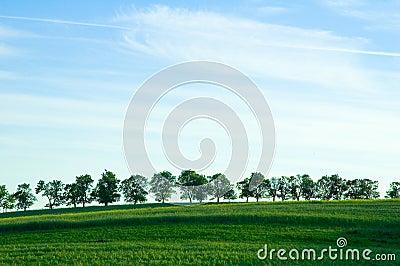 Trees on horizon