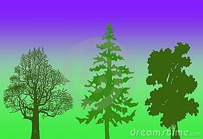 Trees illustration