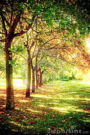 Free Trees In A Row Royalty Free Stock Images - 9542499