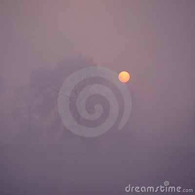 Free Trees In Fog Stock Image - 24265411