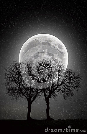 Free Trees In Full Moon Stock Photos - 48509463