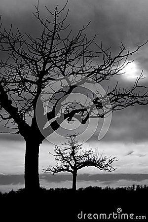 Free Trees In Twilight Stock Photos - 5089773