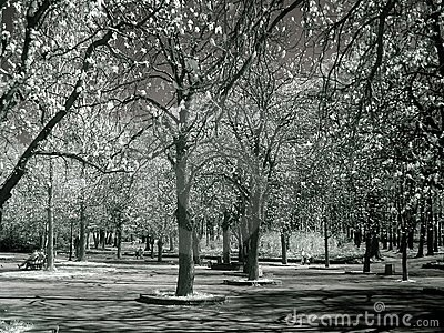 Trees in IR - infrared