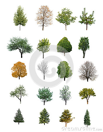 Free Trees Isolated Royalty Free Stock Photo - 43467275