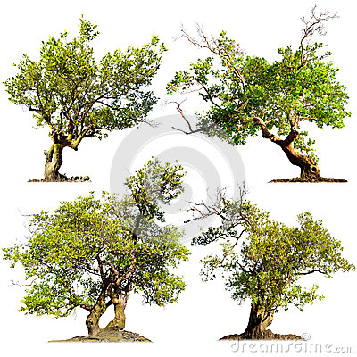 Trees isolated on white background. Green nature plants