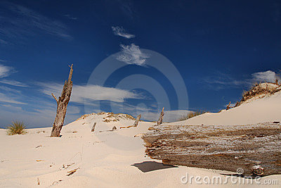 Trees killed by moving dunes