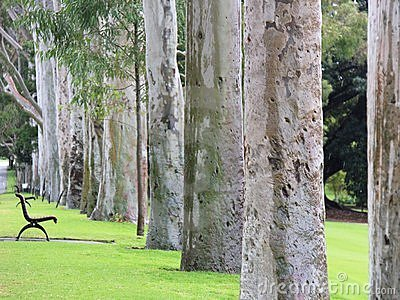 The trees of Kings Park, Perth, Western Australia