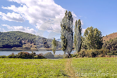 Trees with lake