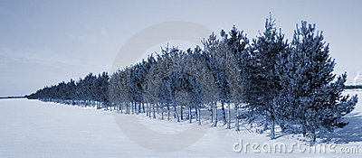 Trees line in winter