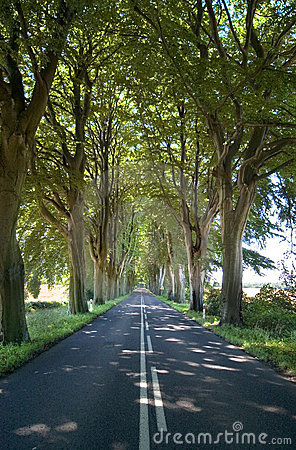 Trees lining straight road