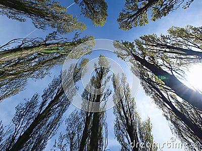 Trees looking towards sky