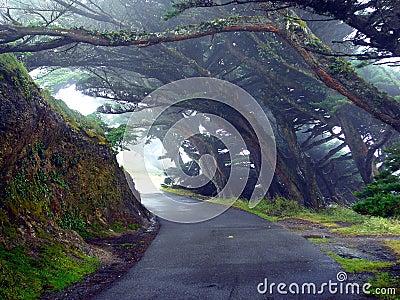 Trees Mist Lane